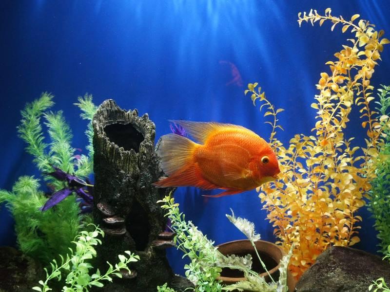 aquariumbenodigdheden
