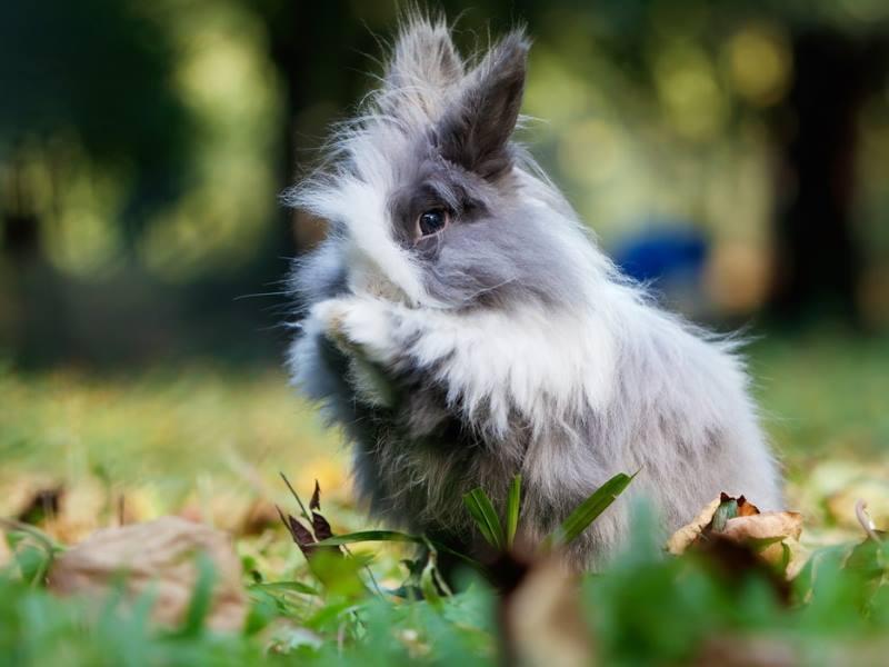 konijnenbenodigdheden